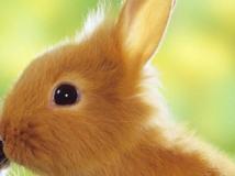 productos conejos