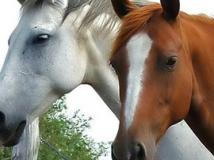 productos caballos